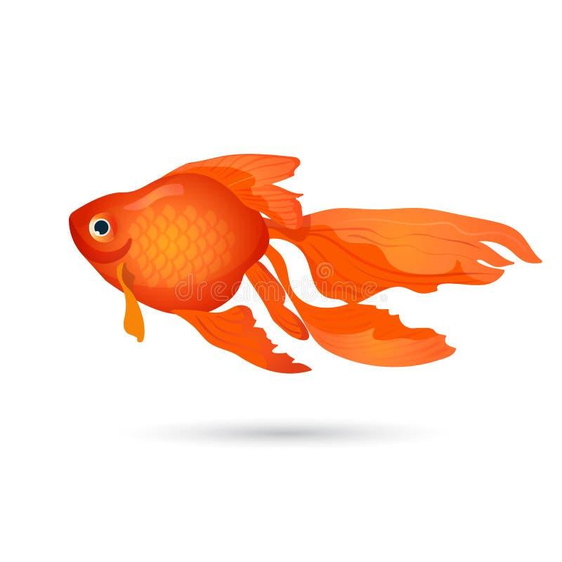 Goldfish aislado en blanco Pequeños pescados rojos del acuario stock de ilustración