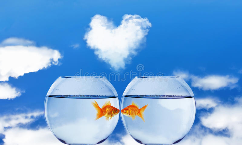 Goldfish and Aquarium royalty free stock photo