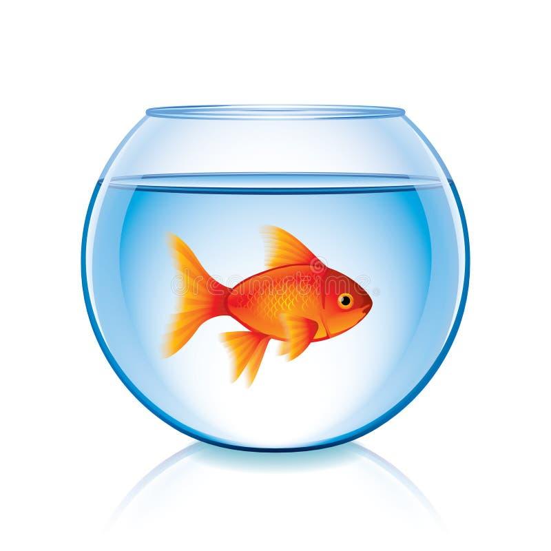 Goldfish in bowl isolated on white vector. Goldfish in bowl isolated on white photo-realistic vector illustration stock illustration