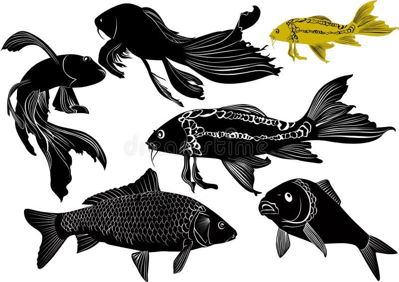 Goldfish carp vector illustration
