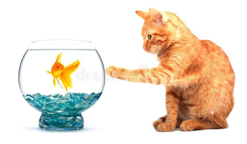 Goldfish and cat royalty free stock photos