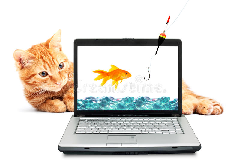 Goldfish, cat, laptop. Isolated on white background stock photo