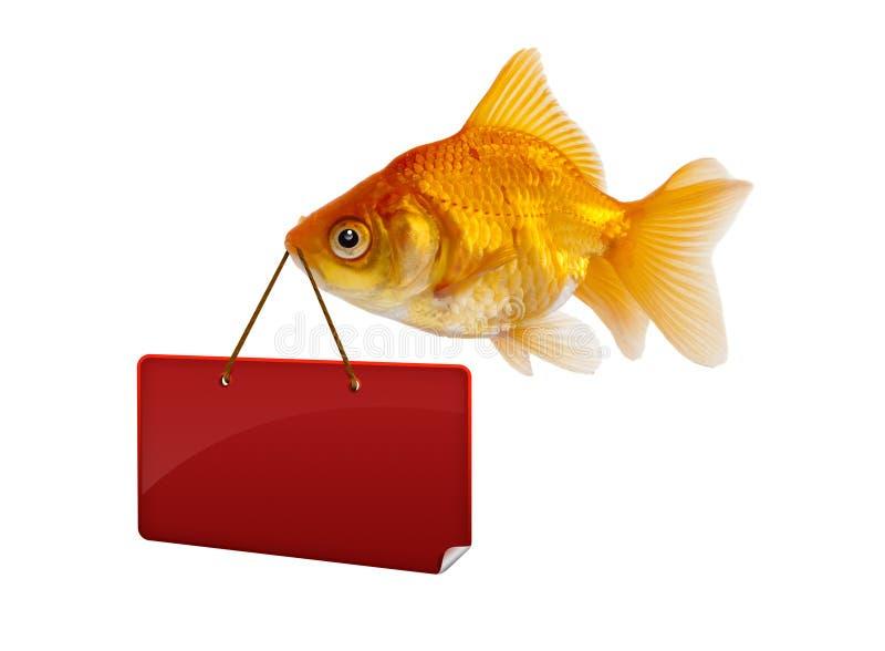 Goldfish com um sinal imagens de stock royalty free