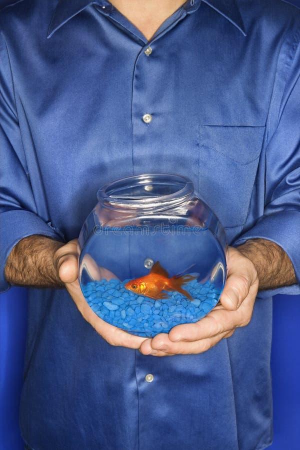Goldfish de fixation d'homme dans la cuvette. images stock