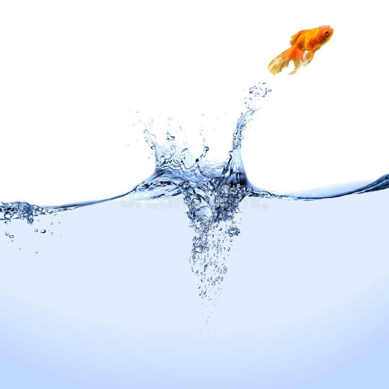 Goldfish de salto imagen de archivo libre de regalías