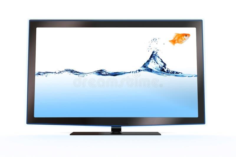 Goldfish, der aus einem stilvollen lcd-Fernsehapparat heraus springt lizenzfreie abbildung