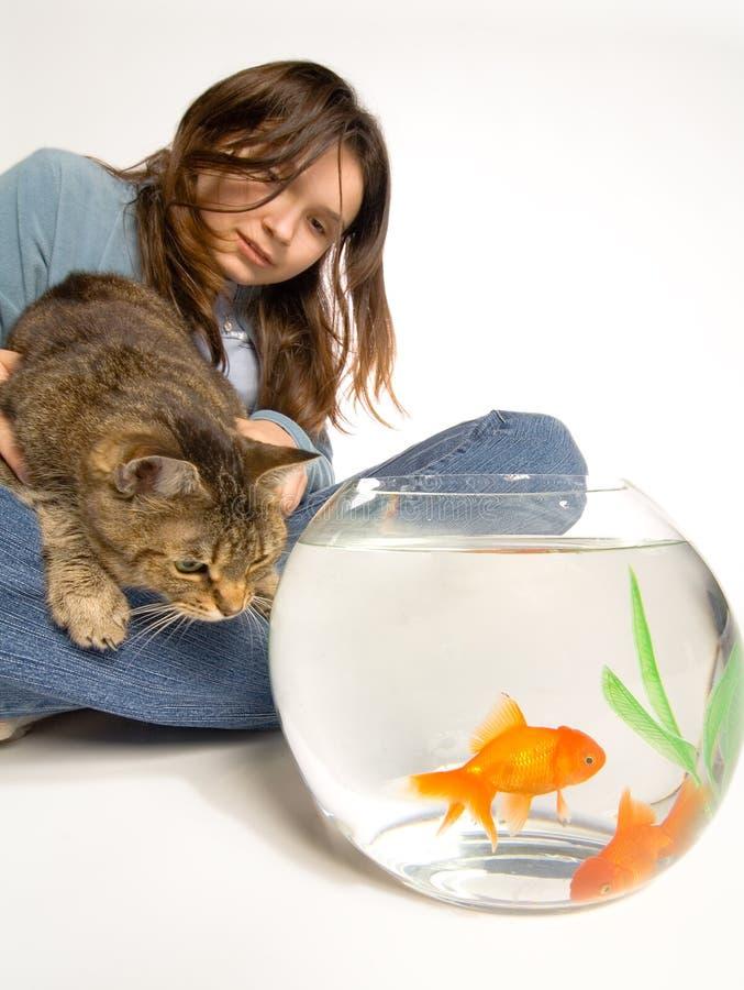 Goldfish di sorveglianza del gatto affamato fotografia stock