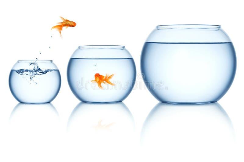 Goldfish do vôo ilustração royalty free