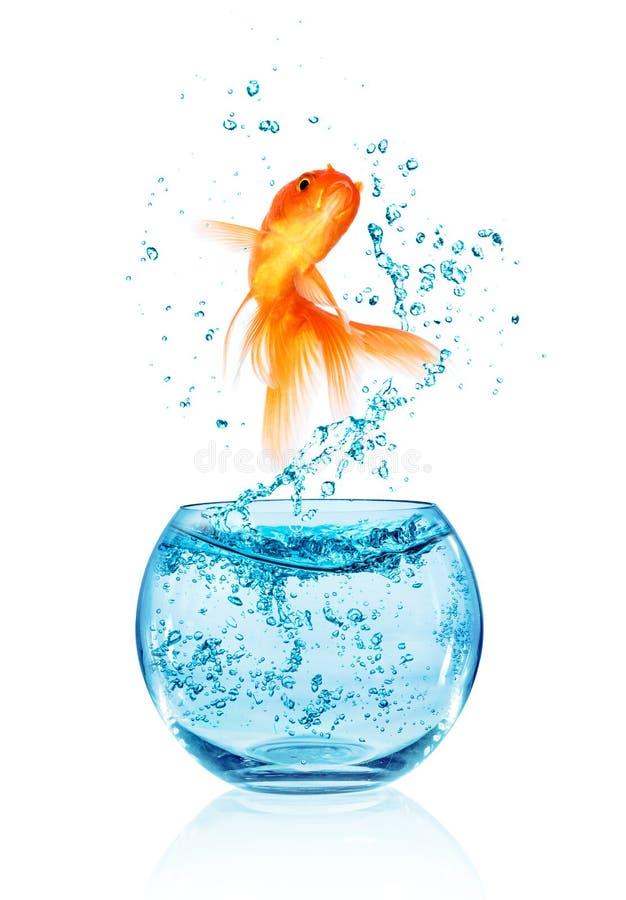Goldfish doskakiwanie. zdjęcie royalty free