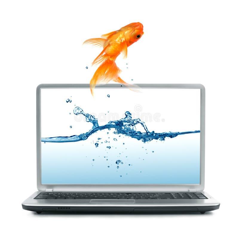 Goldfish doskakiwanie z monitoru obrazy stock