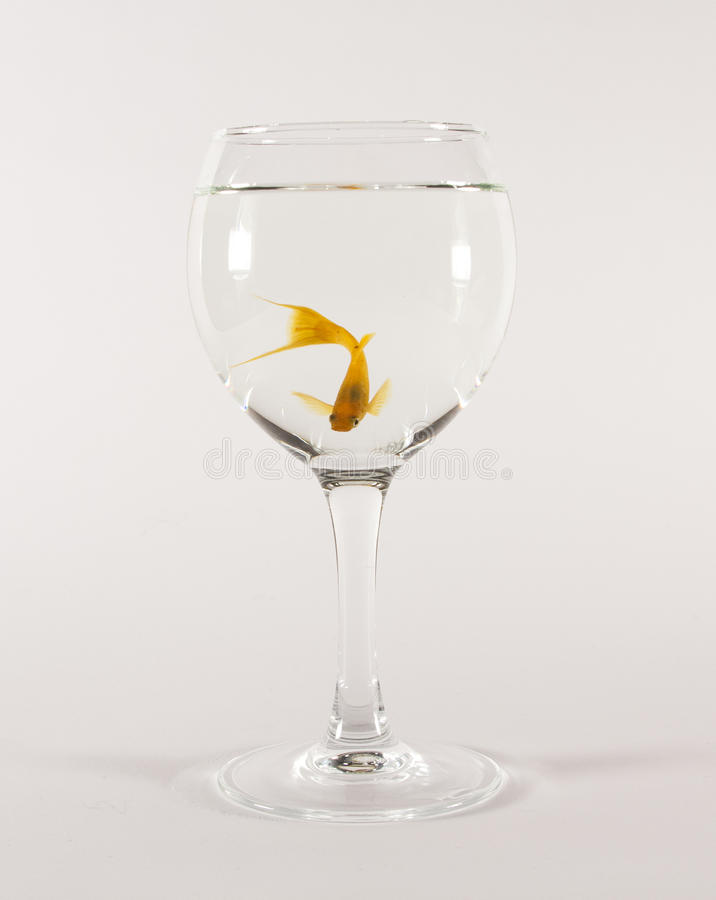 Goldfish in einem Glas stockfoto