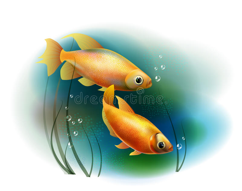 Goldfish en el mar libre illustration