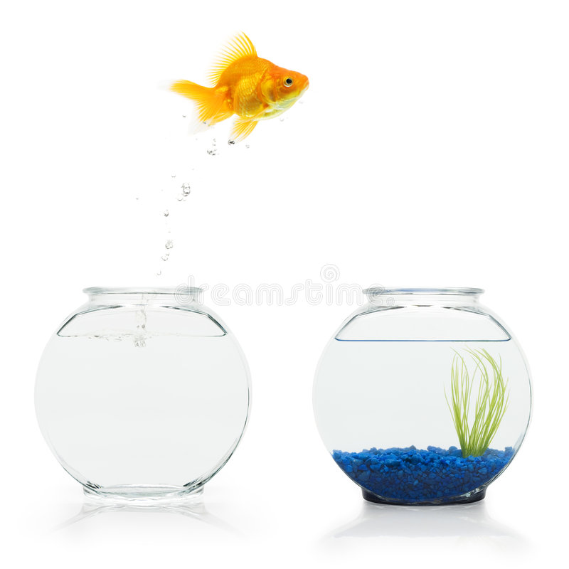 Goldfish Escape stock photos
