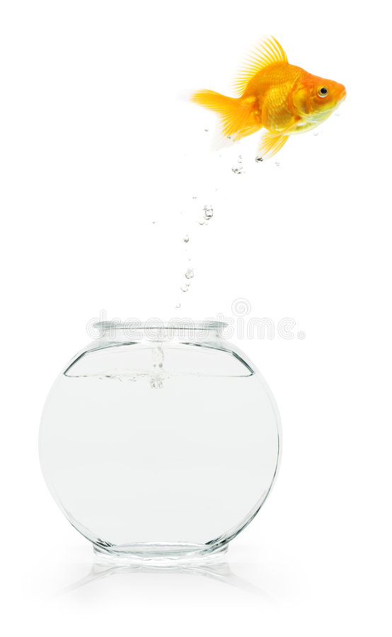 Download Goldfish Escape Royalty Free Stock Photography - Image: 6244727