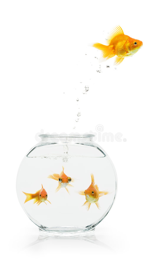 Download Goldfish Escape stock image. Image of fishbowl, digital - 6244733
