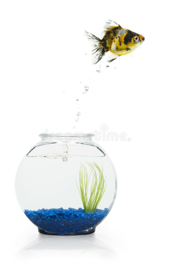 Download Goldfish Escape stock image. Image of concepts, freedom - 6244737