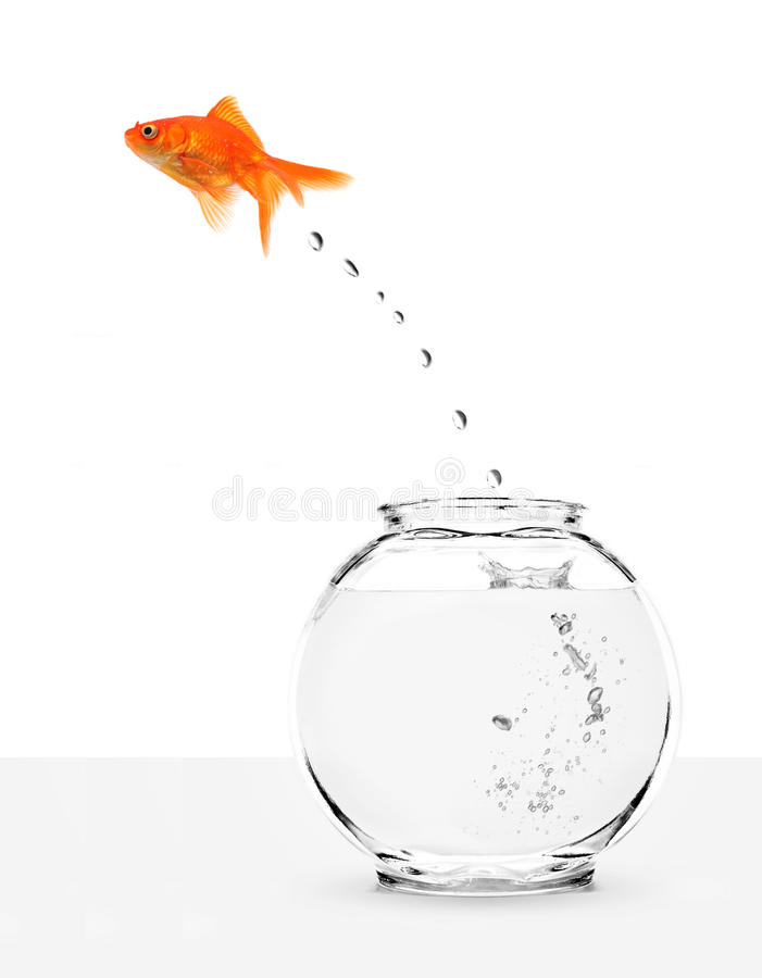 Free Goldfish Escaping From Fishbowl Royalty Free Stock Images - 11523609
