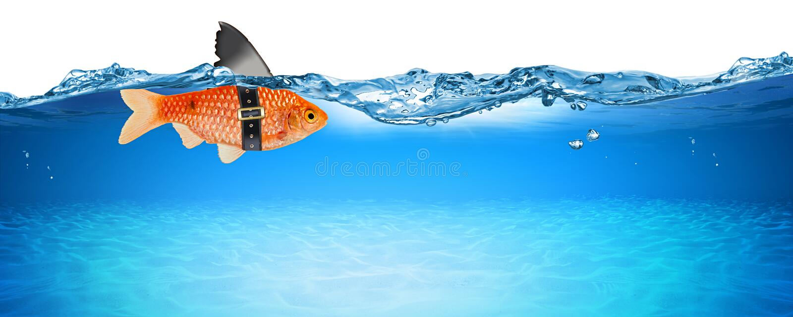 Goldfish with fake shark fin creative business idea innovation concept isolated. On blue panorama underwater background royalty free stock photography