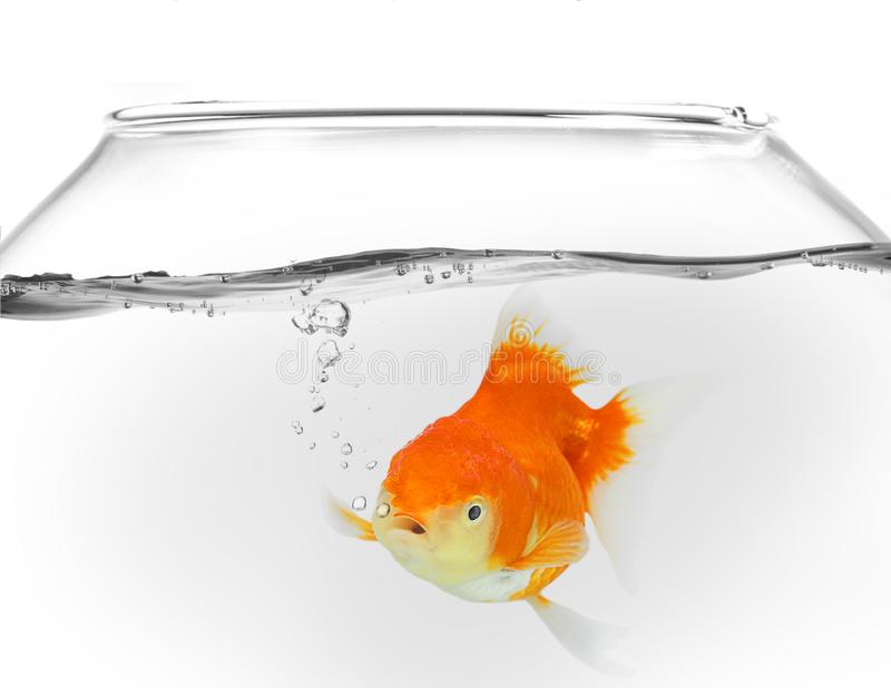 Goldfish in fish bowl with water drops bubbles on white background. Isolate royalty free illustration