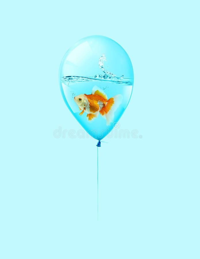 Goldfish fly in balloon . Mixed media, Gold fish swimming in blue balloons on blue background. Isolate stock illustration