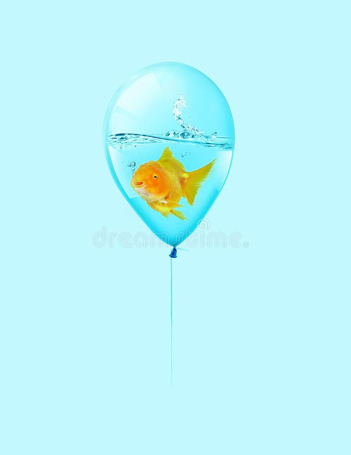 Goldfish fly in balloon . Mixed media, Gold fish swimming in blue balloons on blue background, Goldfish are smiling. Goldfish fly in balloon . Mixed media, Gold vector illustration