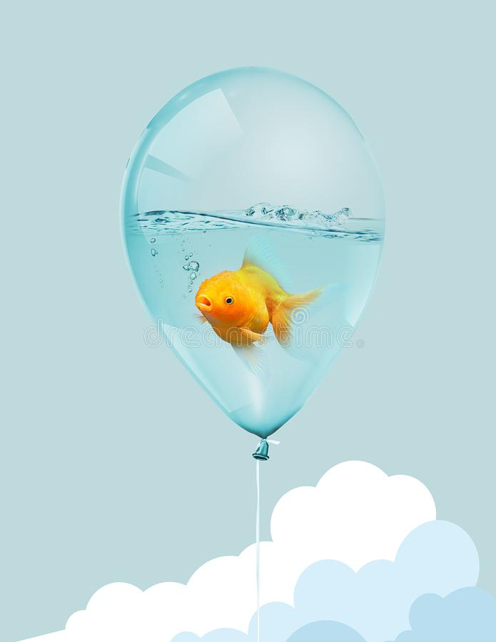 Goldfish fly in balloon . Mixed media, Gold fish swimming in blue balloons on blue sky with .cloud background. Goldfish fly in balloon . Mixed media, Gold fish stock illustration