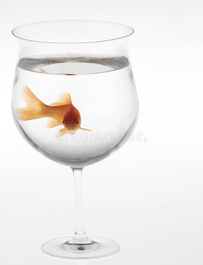 Goldfish in a glass royalty free stock photos