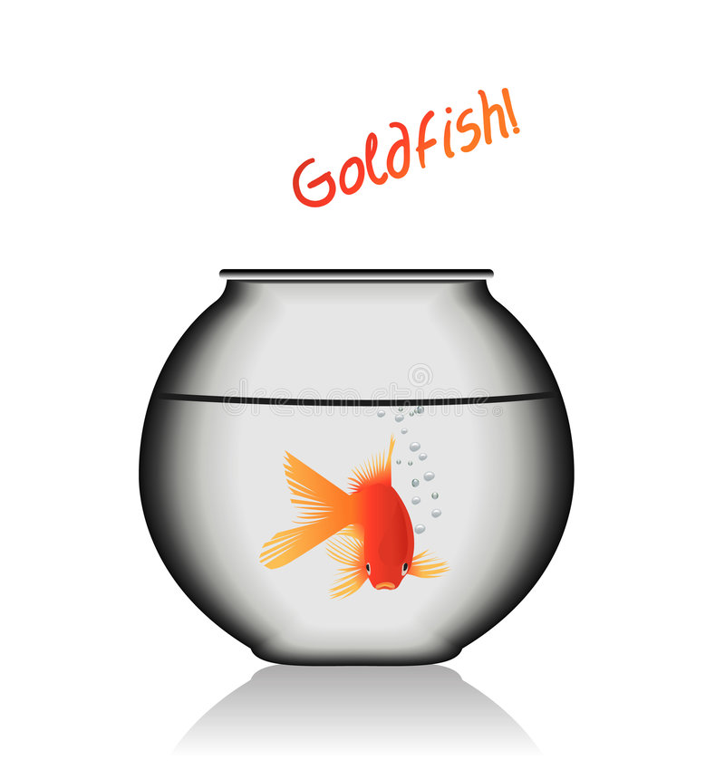 Goldfish in a glass bowl. An illustration of a goldfish in a glass bowl royalty free illustration