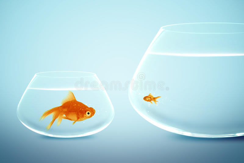 Goldfish grande e pequeno fotografia de stock royalty free