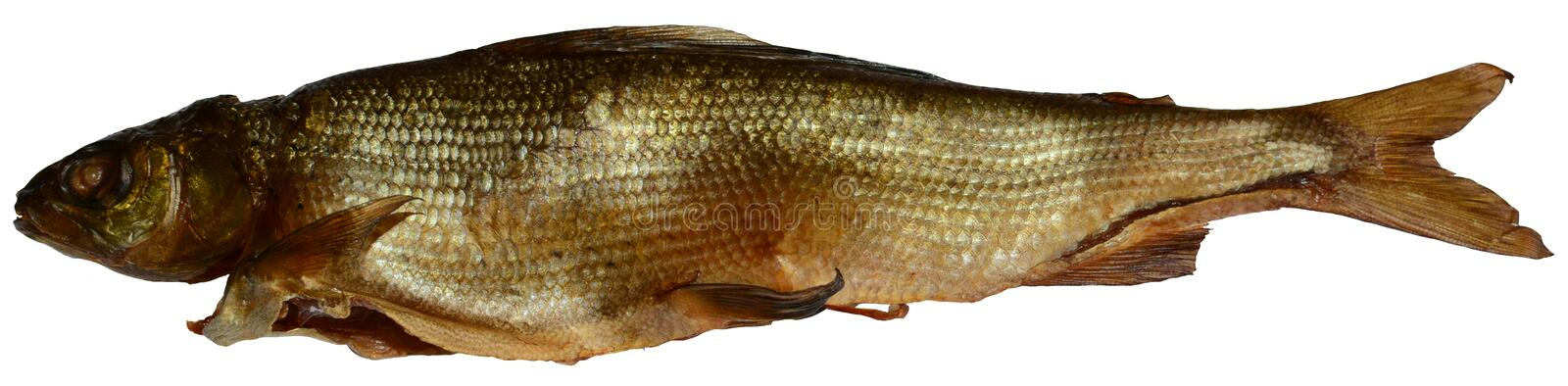 Goldfish grayling stock images