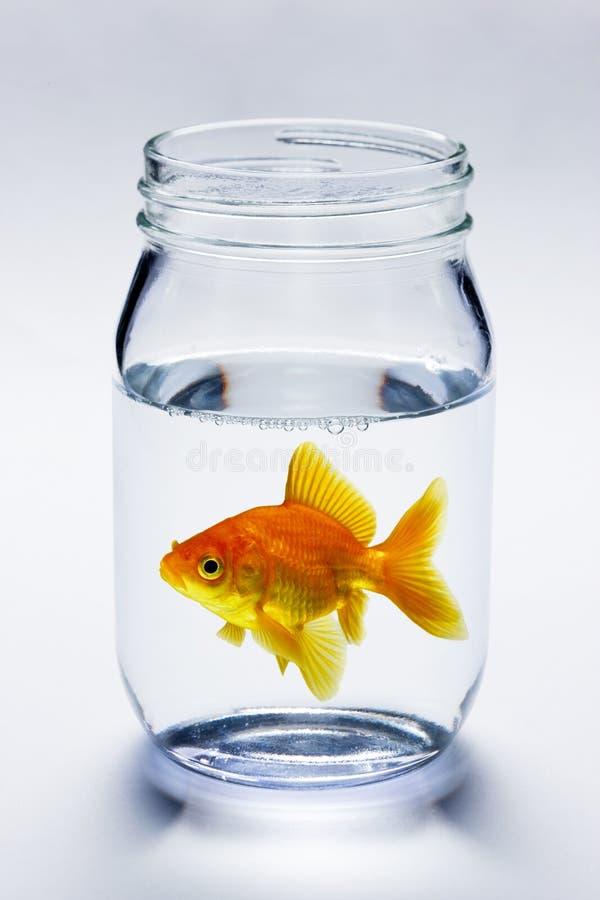 Goldfish im Glas lizenzfreies stockbild