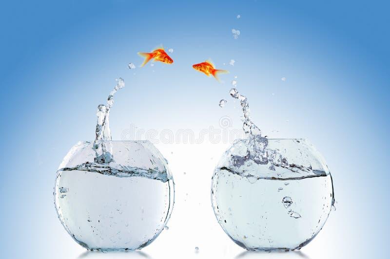 Goldfish jump royalty free stock photos