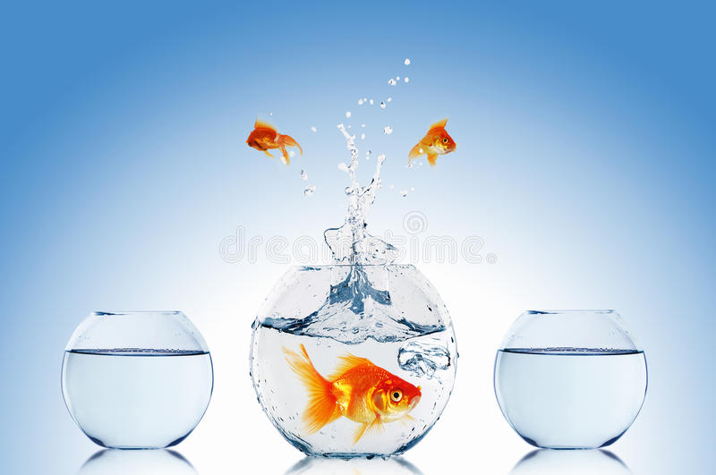 Goldfish jump stock photos