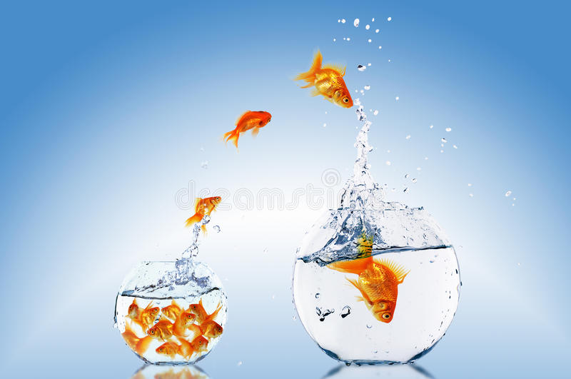 Goldfish jump stock photo