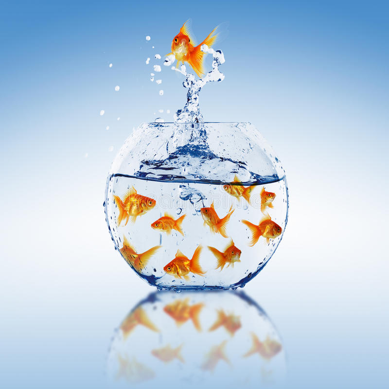 Download Goldfish jump stock image. Image of business, jumper - 14839259