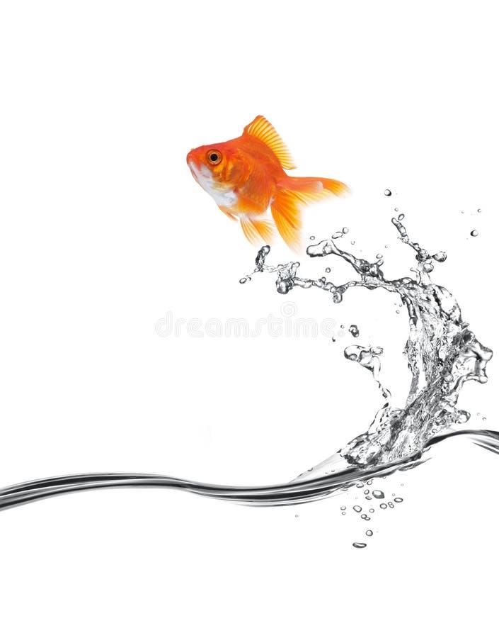 Free Goldfish Jump Royalty Free Stock Image - 8091656