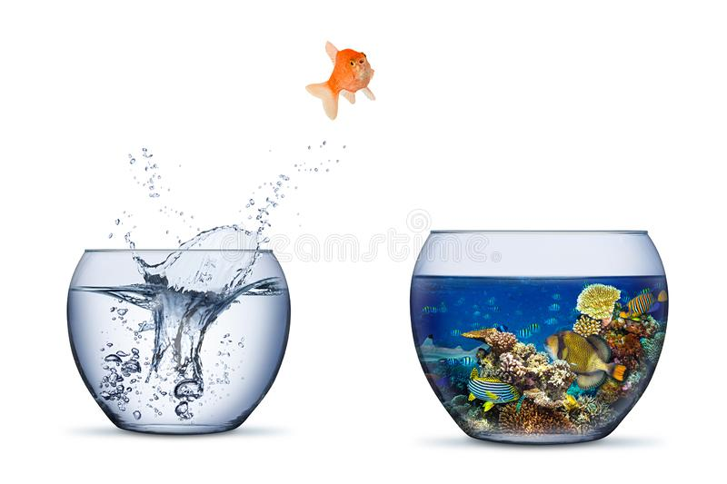 Goldfish jump out of bowl into coral reef paradise fish change chance freedom concept isolated background stock photography