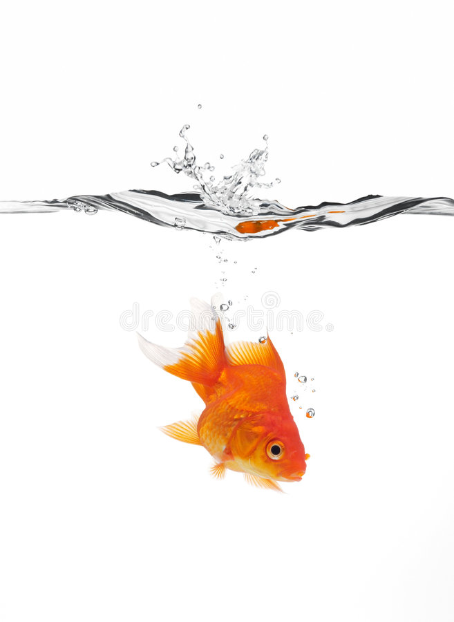 Goldfish jumped into water stock images