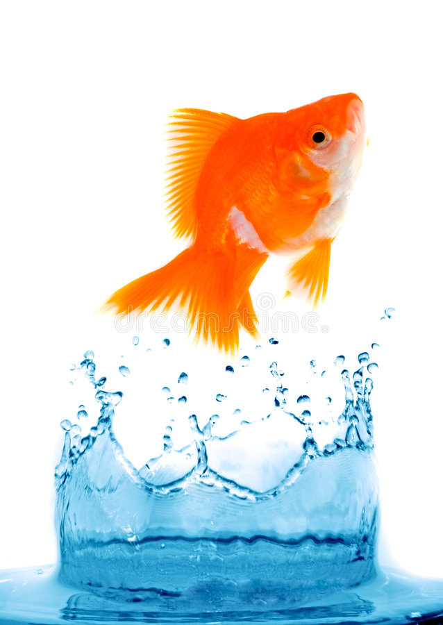 Download Goldfish is jumping stock photo. Image of loneliness, environment - 3657856