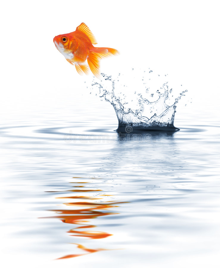 Download Goldfish jumping stock photo. Image of ripple, drop, escaping - 8599898