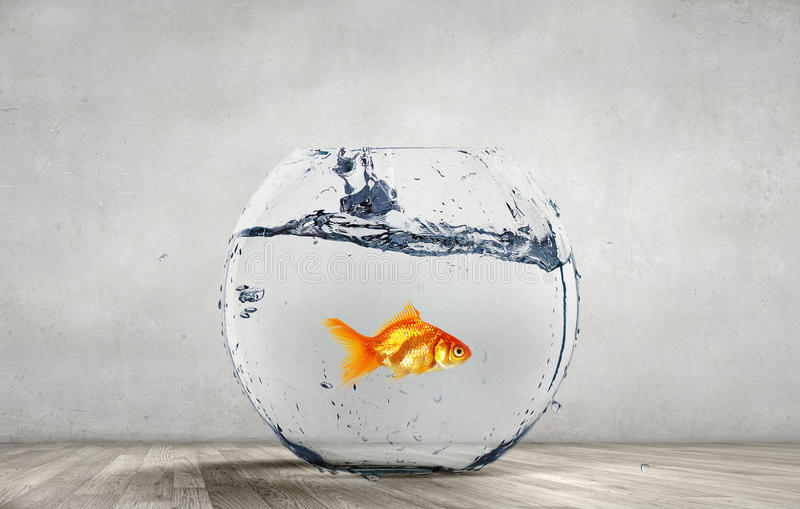 Goldfish jumping from aquarium stock image