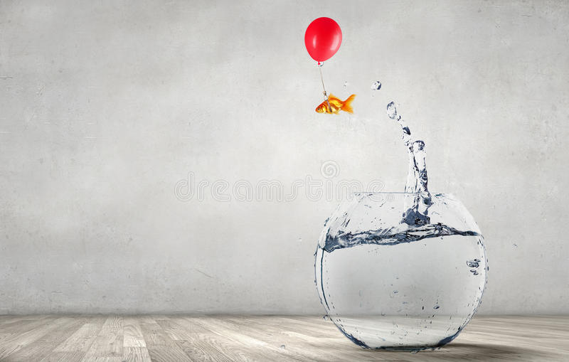 Goldfish jumping from aquarium royalty free stock photos