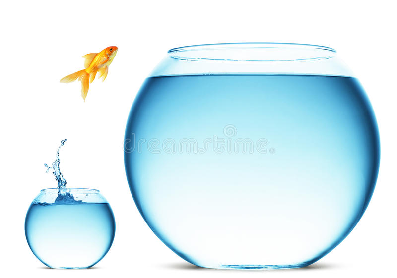 Goldfish jumping from bowl stock photography