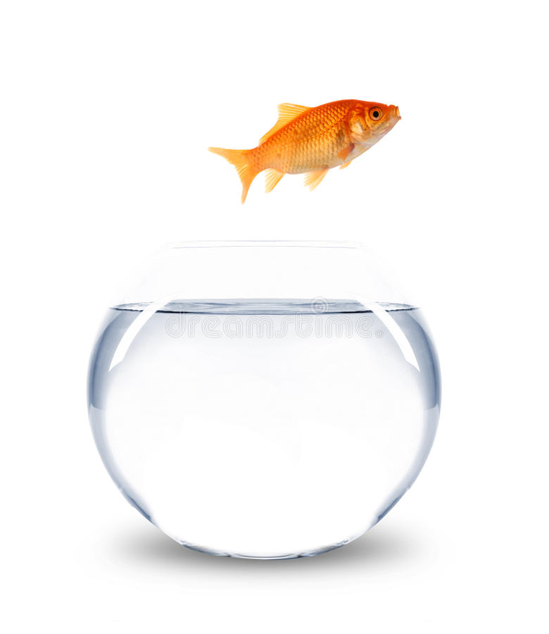 Goldfish jumping out of bowl royalty free stock images