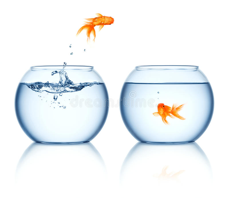 A goldfish jumping out of the fishbowl. Goldfish jumping to another fishbowl royalty free stock images