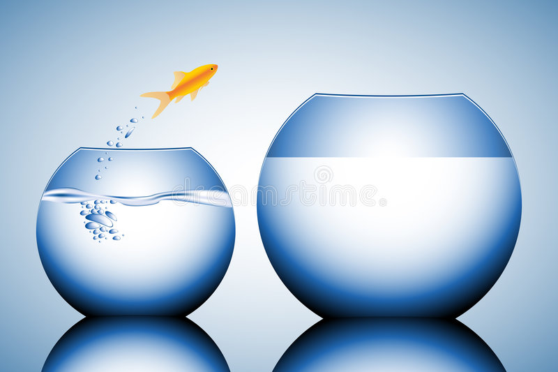 Download Goldfish Jumping Out Of The Wa Stock Vector - Image: 5651337