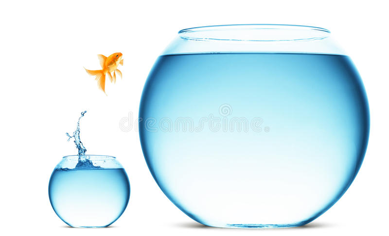 Goldfish jumping out of the water royalty free stock photo