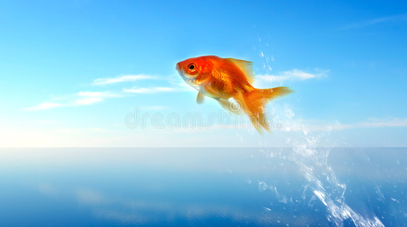 Download Goldfish Jumping Out Of The Water Stock Photo - Image: 4028138