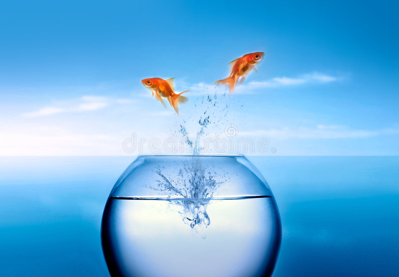 Download Goldfish Jumping Out Of The Water Stock Photo - Image: 4029900