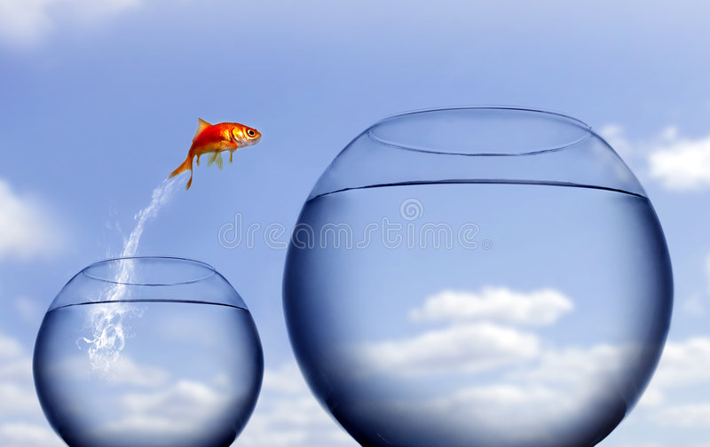 Download Goldfish Jumping Out Of The Water Stock Photo - Image: 4753246